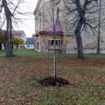 2008 – Sázení stromu Republiky