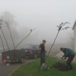 2012 – Dosazování hlohů na náměstí profesora Babáka a v ulici Komenského ve Smidarech